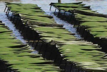 parc a huitres arcachon